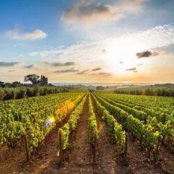 Как изменение климата повлияло на виноделие
